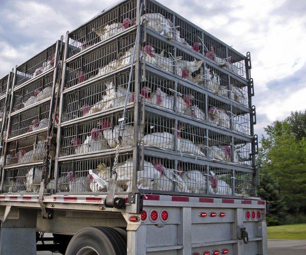Nettoyant désinfectant camion agro / Désinfectant camion frigorifique