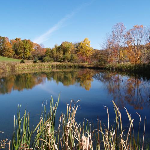 Traitement naturel de fontaine et jardin d'agrément / Traitement biologique d'étang et eau de pêcherie